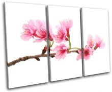 Cherry Blossoms Floral - 13-1138(00B)-TR32-LO
